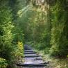 Ohne Wald und Holz kein Klimaschutz